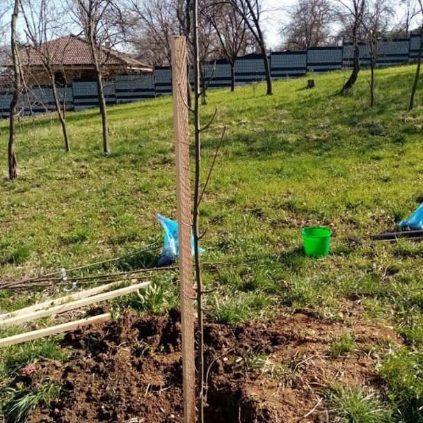 Nová výsadba drevín