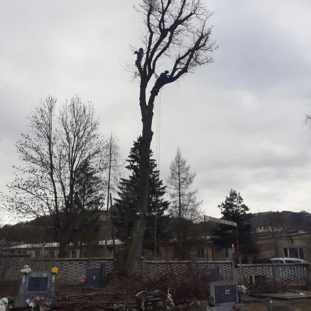 Cintorín stromy